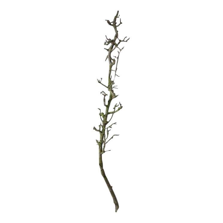 Perentak Naturel 165 cm