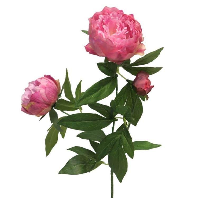 Pioenroos Roze 70 cm