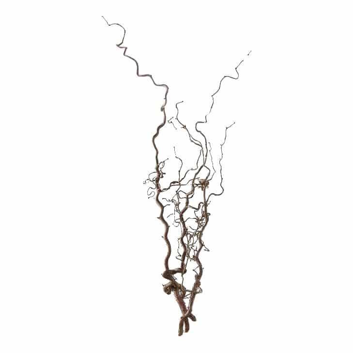 5 Kronkelhazelaars Takken Naturel 100 cm