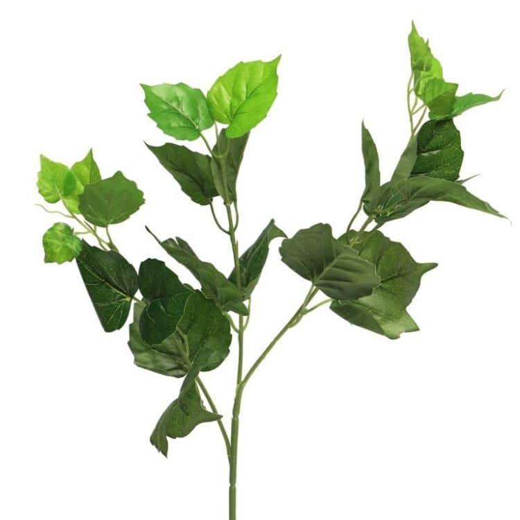 Berkenblad Groen 70 cm
