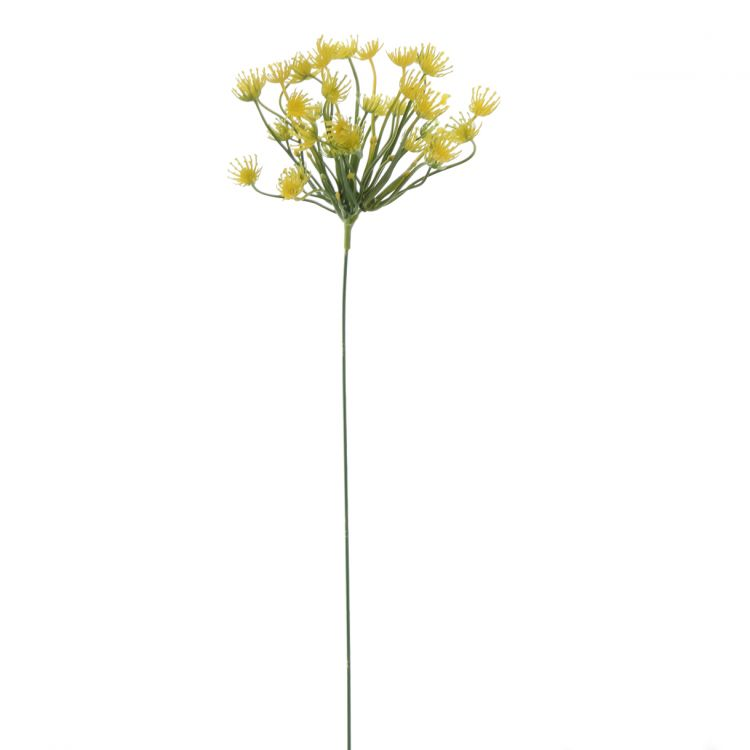 Dille Geel 50 cm