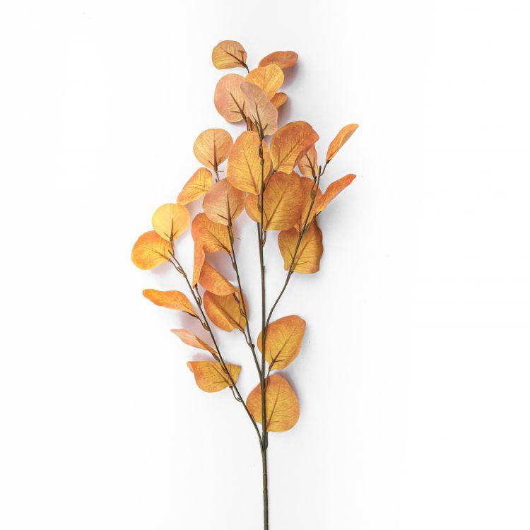 Eucalyptus Geel 85 cm