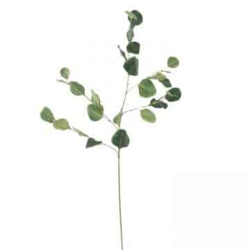 Eucalyptus Groen 85 cm
