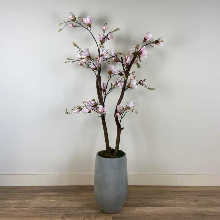 Roze Magnolia Boompje ± 150 cm (incl. grijze pot)