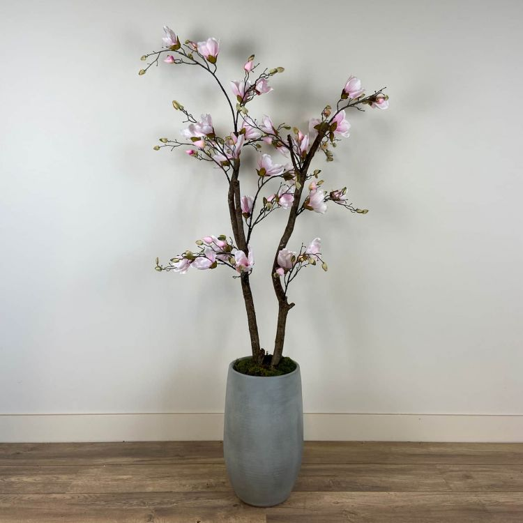 Roze Magnolia Boompje ± 150 cm (excl. pot)