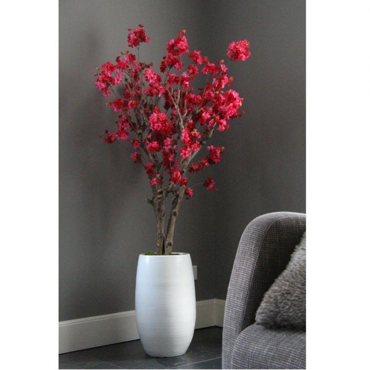 Fruit bloesemboom Fuchsia ± 140 cm (incl.witte  pot)