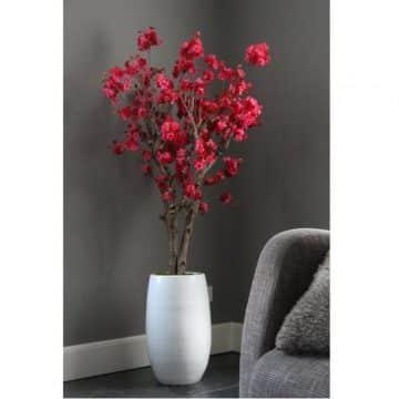 Fruit bloesemboom Fuchsia ± 140 cm (excl. pot)