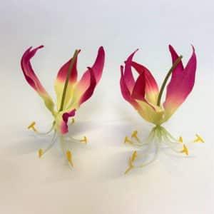Gloriosa Bloem 12 cm (12 stuks)