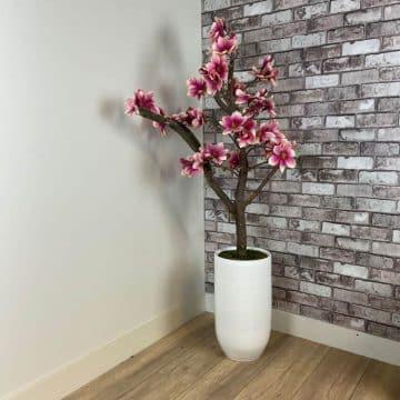 Fuchsia-Wit Magnolia Boompje ± 150 cm (excl. pot)