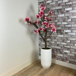 Fuchsia-Wit Magnolia Boompje ± 150 cm ( incl. witte pot.)