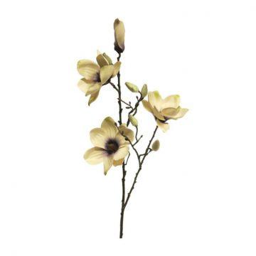 Magnolia Ivoor Paars 80 cm