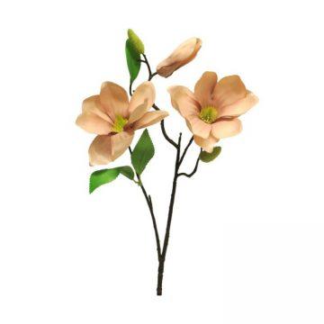 Magnolia Oud Roze met knoppen 60 cm