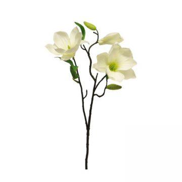 Magnolia Wit met knoppen 60 cm