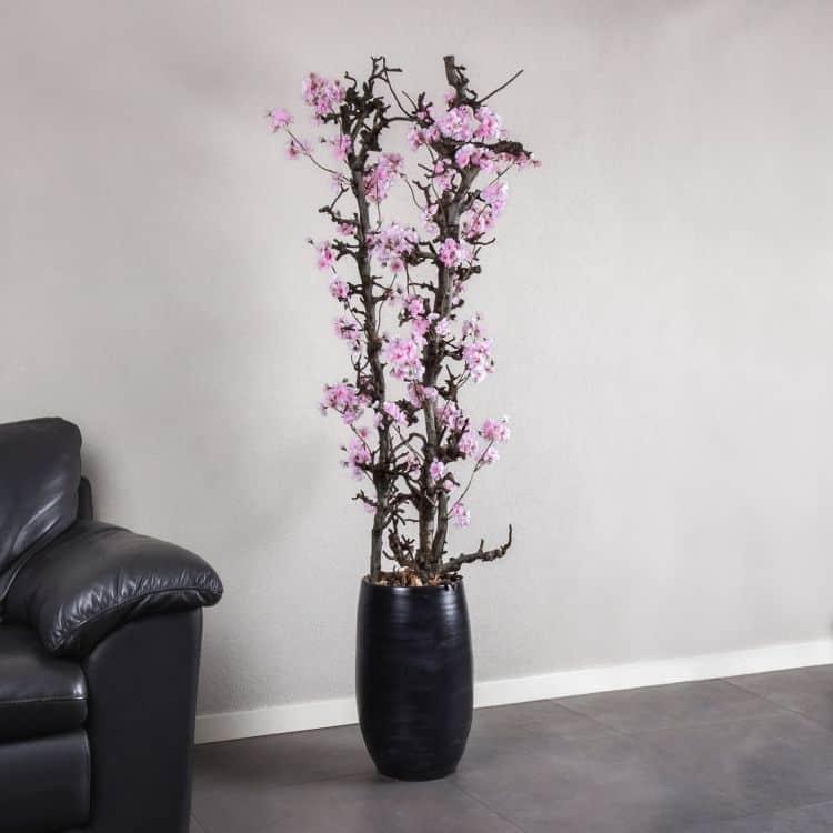 Peren bloesemboom Roze ± 150 cm (excl. pot)
