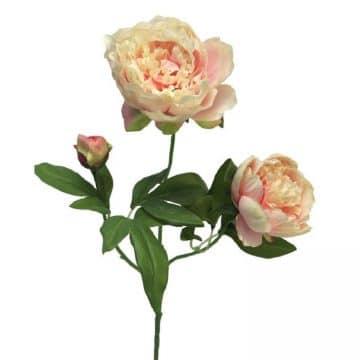 Pioen roos  roze- wit 70 cm