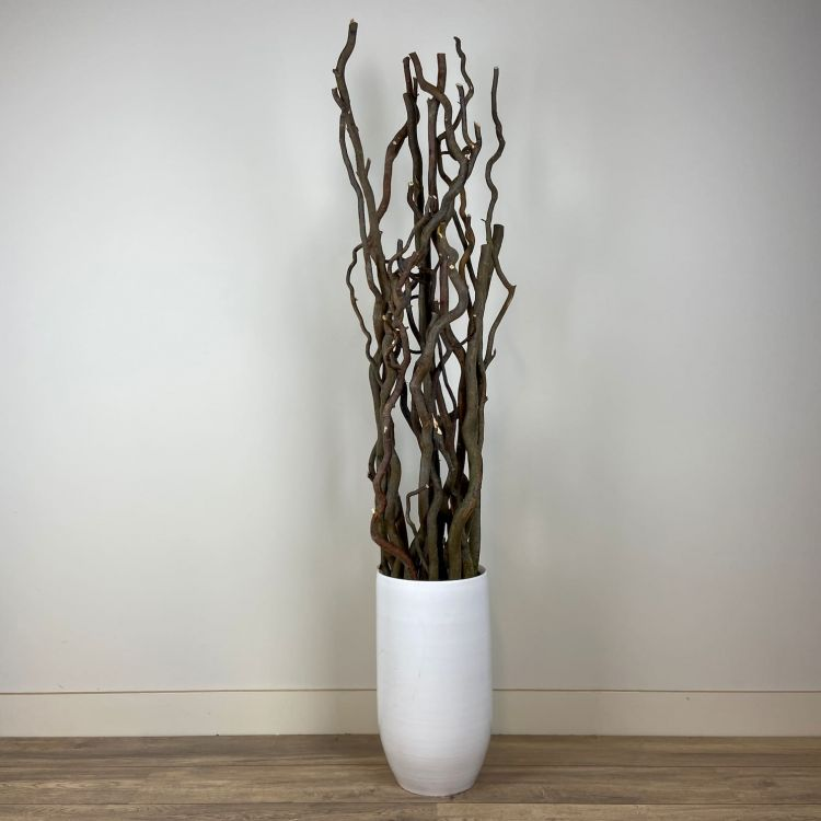Set  naturel kronkelige stammen 165 cm Excl. pot