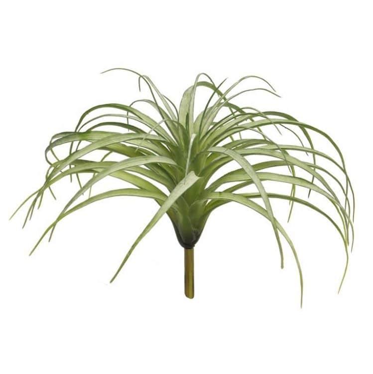 Tillandsia Groen Groot  25 cm