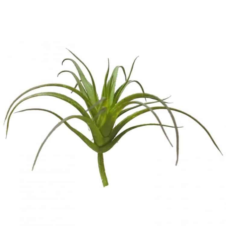 Tillandsia Groen Klein 8 cm