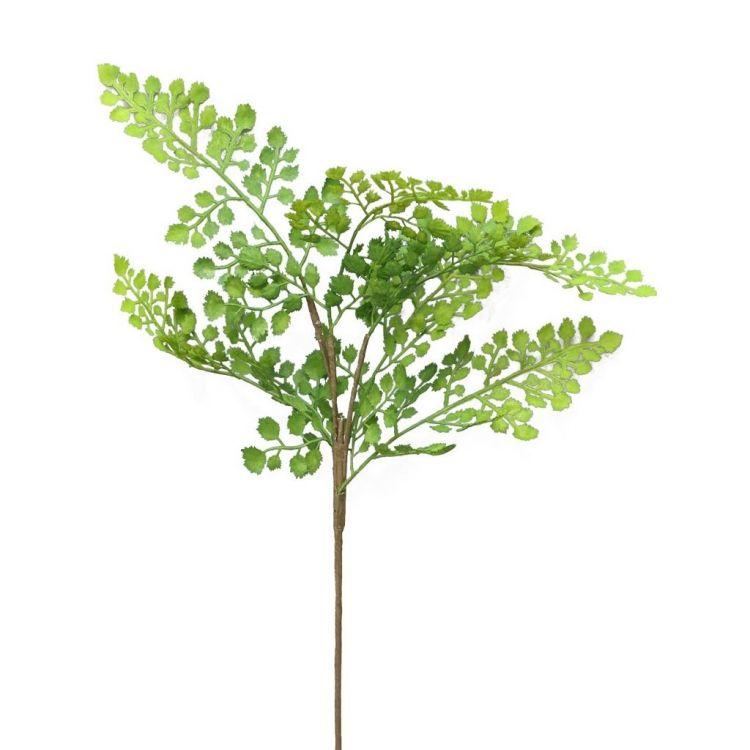 Varen  klein blad 50 cm