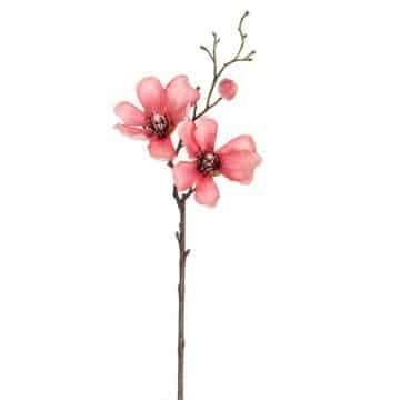 Magnolia Zalm 45 cm