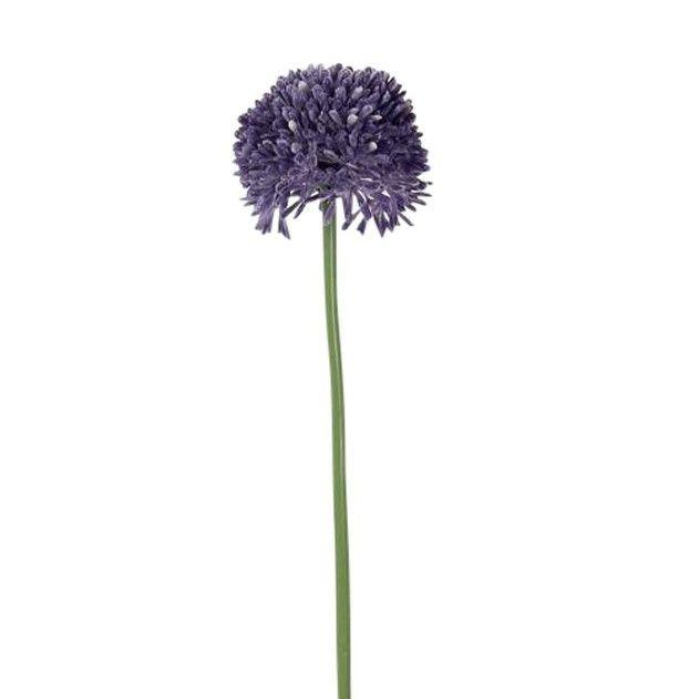 Allium Paars Groot 65 cm