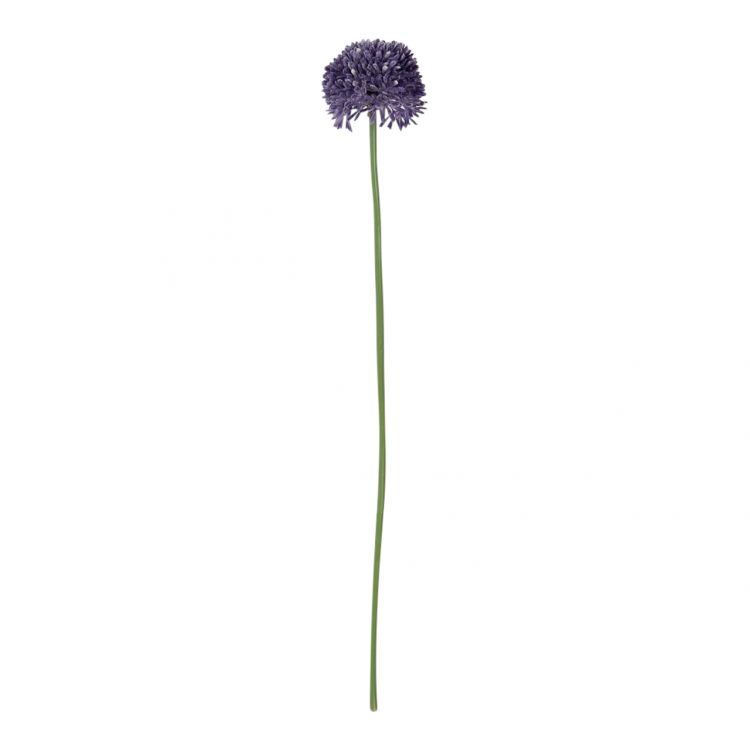 Allium Purple Klein 50 cm