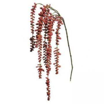 Kattenstaart-Amarant Rood 105 cm