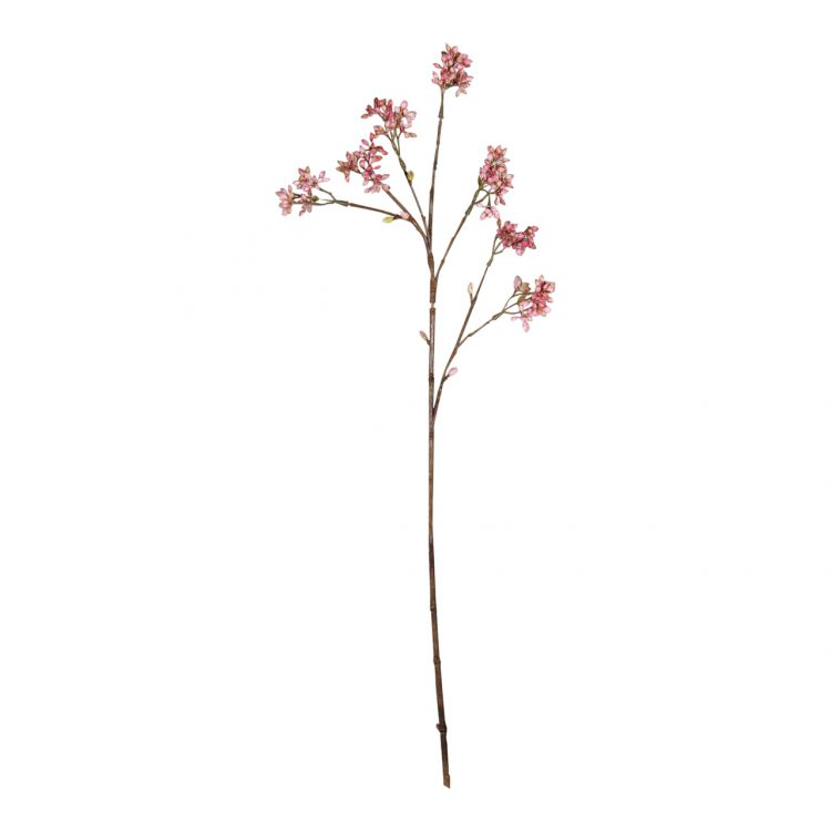 Arborescens Zachtroze 60 cm