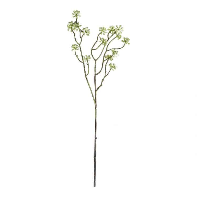 Arborescens Groen 60 cm