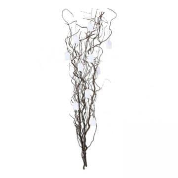 Wensboom Naturel 120 cm