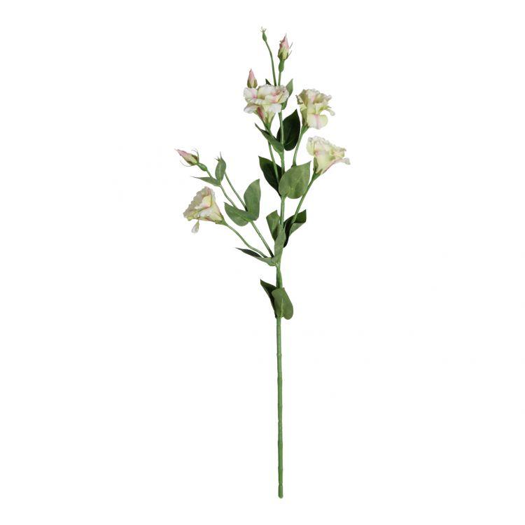 Eustoma Groen-Roze 80 cm