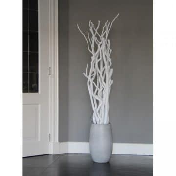 Set Witte Stammen 165 cm (incl. pot)