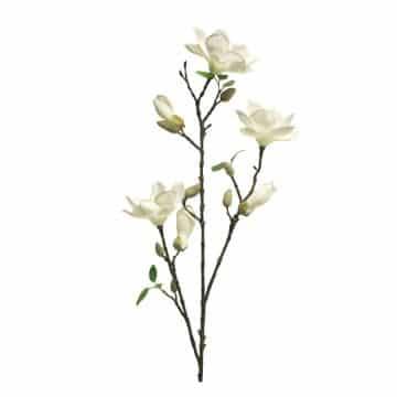 Magnolia Wit met bloemen knoppen 85 cm.