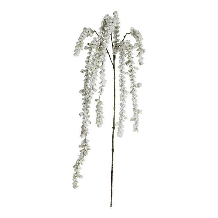 Kattenstaart-Amarant Wit 105 cm