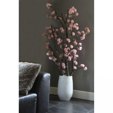 Kersen Bloesemboom Dubbel. Excl. pot  ± 150 cm