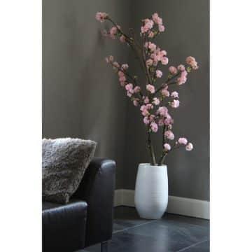 Kersen Roze Bloesemboom. Excl pot.  ± 150 cm