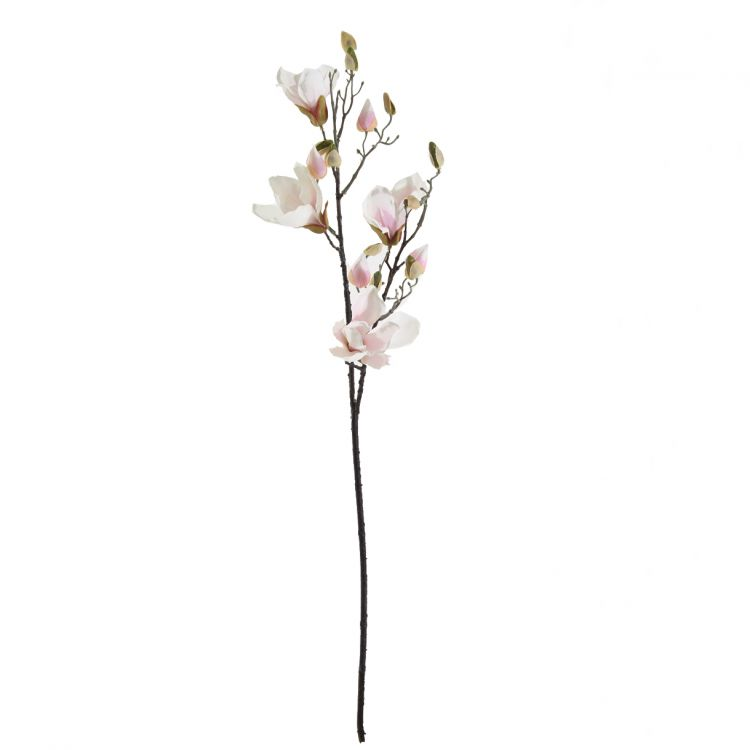 Magnolia Wit - Roze 90 cm