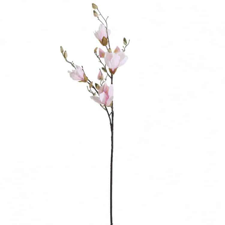 Magnolia Zachtroze 90 cm