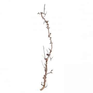 Brocante Perentak 165 cm