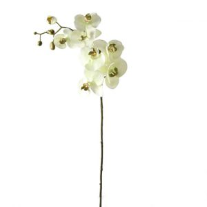 Orchidee Zachtgroen 100 cm
