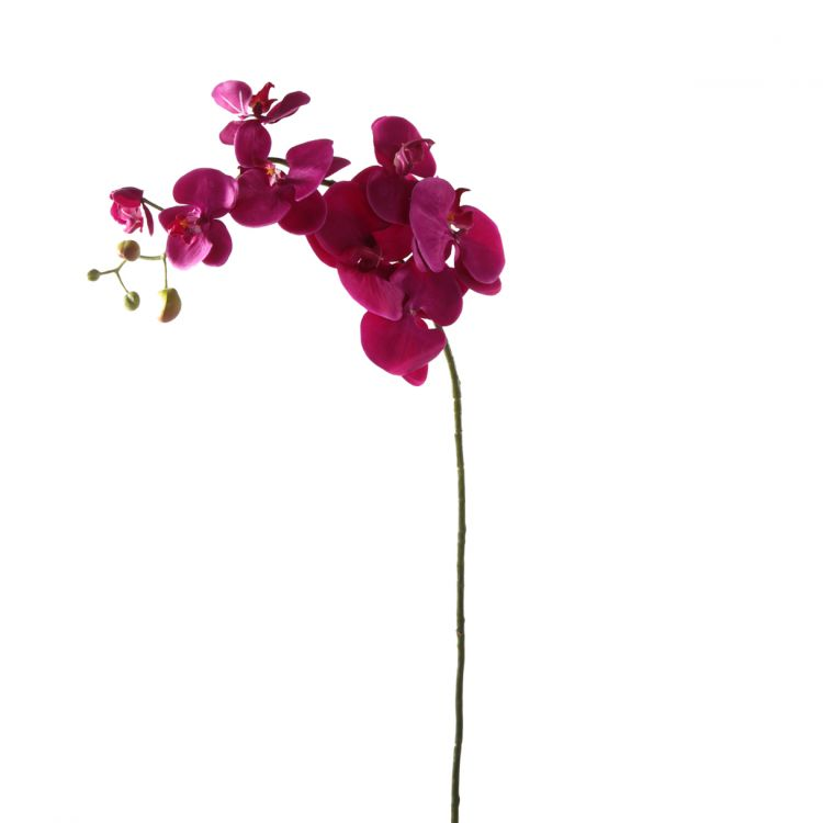 Orchidee Paars 100 cm