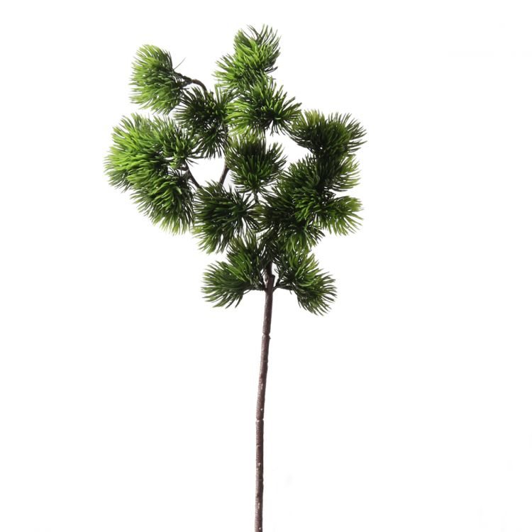 Bonsai tak 40 cm