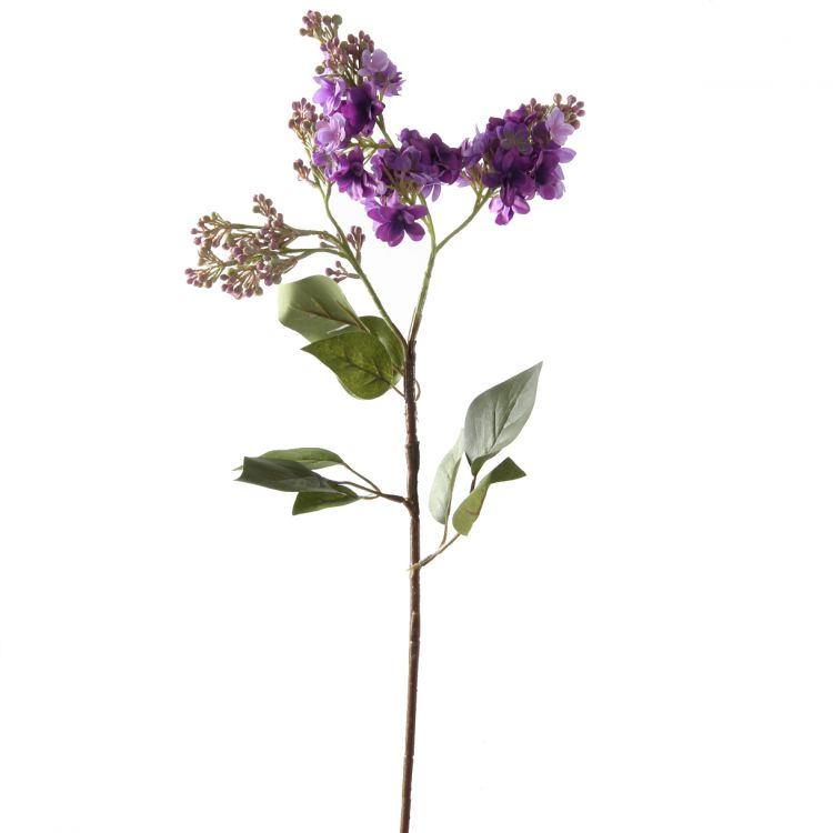 Seringen Violet 70 cm