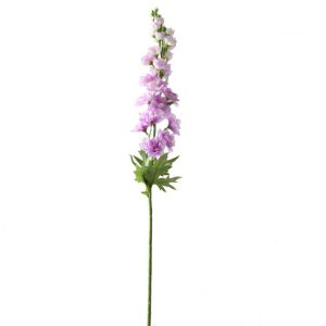 Ridderspoor Lila 70 cm