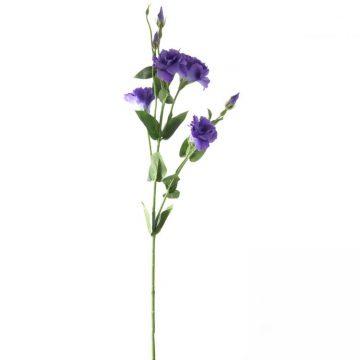 Eustoma Paars 80 cm