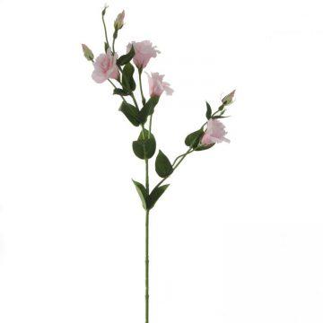Eustoma Roze 80 cm