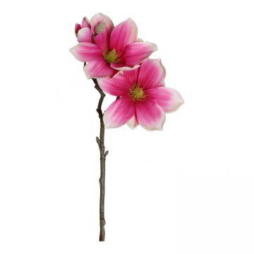 Magnolia Fuchsia 40 cm