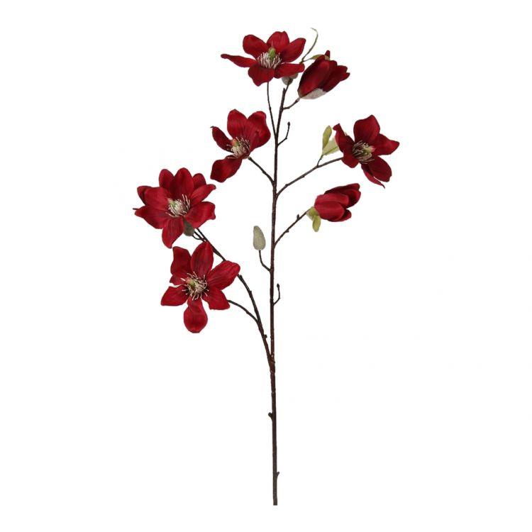 Magnolia Rood 75 cm