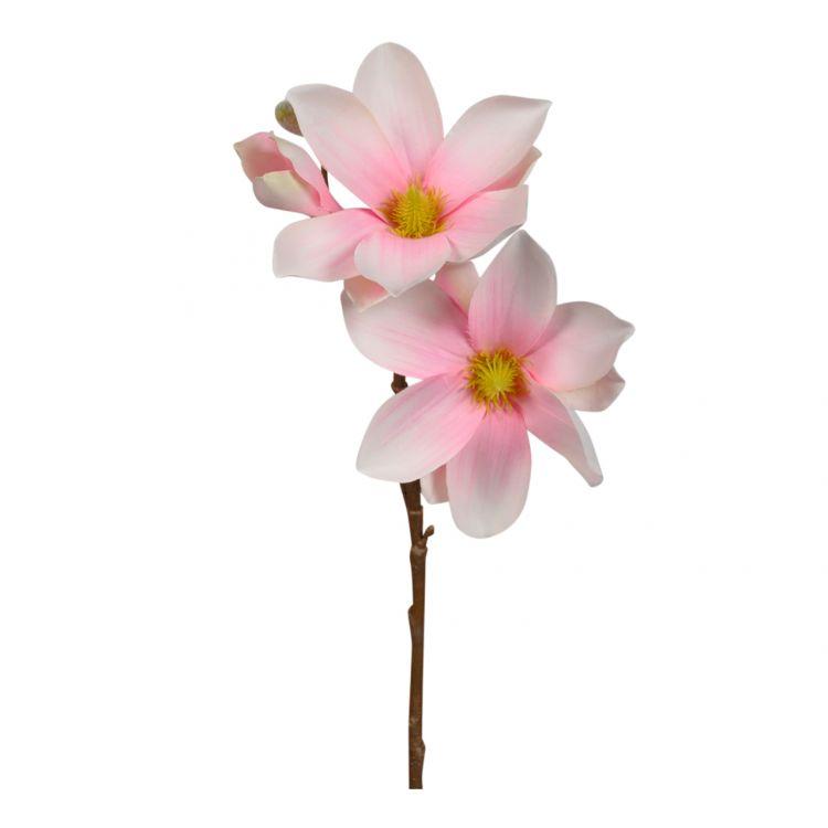 Magnolia Zachtroze 40 cm