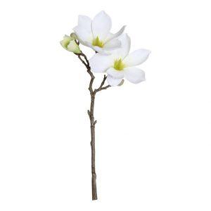 Magnolia Wit 40 cm